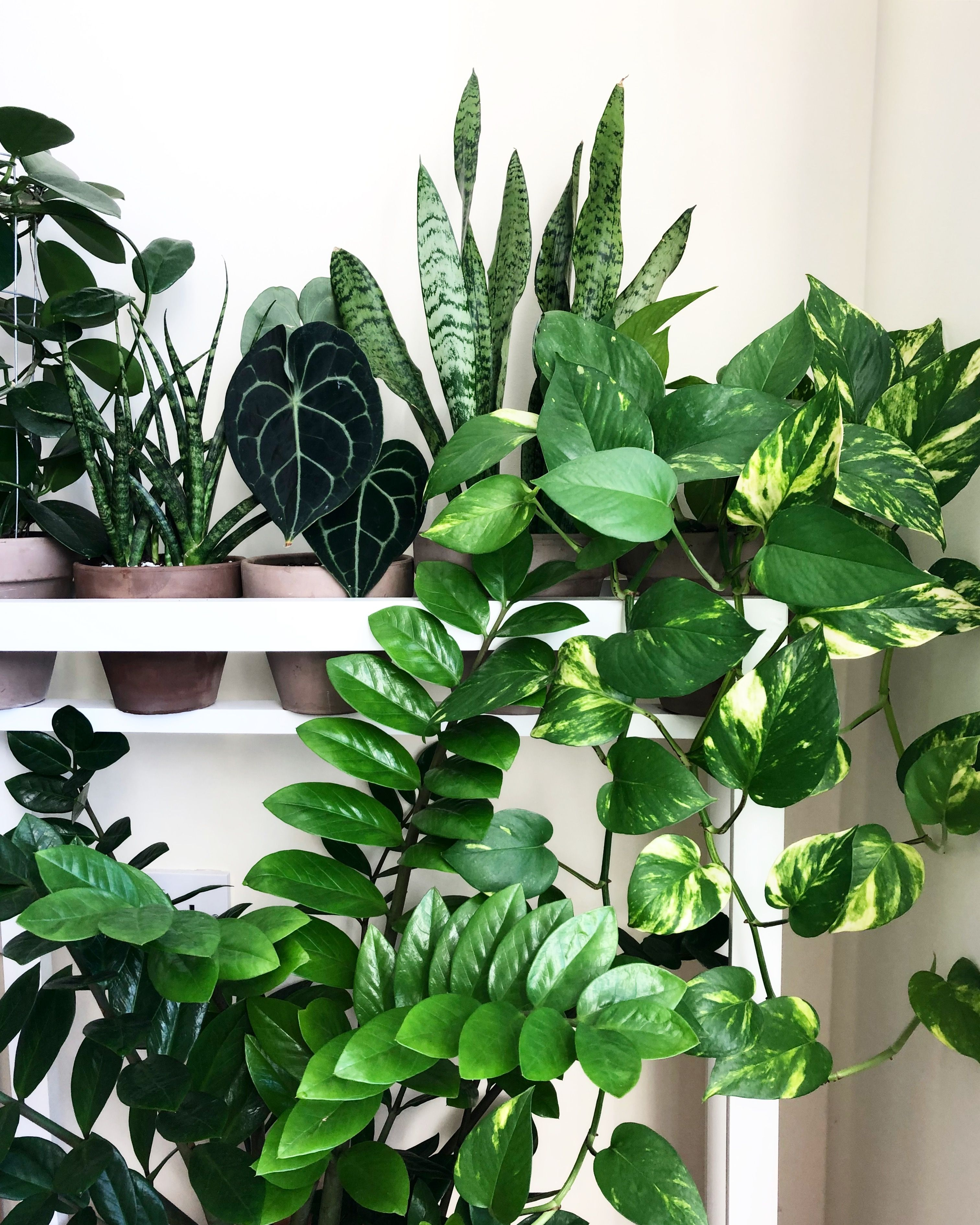 Trendy houseplants for an indoor sanctuary - Sprig & Vine on best clean air plants home, air plants for home, good plants books, water plants for home, mint plants for home, good dogs for home, fake plants for home, green plants for home, red plants for home, best plants for home, feng shui plants for home, house plants for home, money plants for home, good plants outdoors, plants in your home, low light plants for home, good plants to grow indoors, lucky plants for home, healthy plants for home,